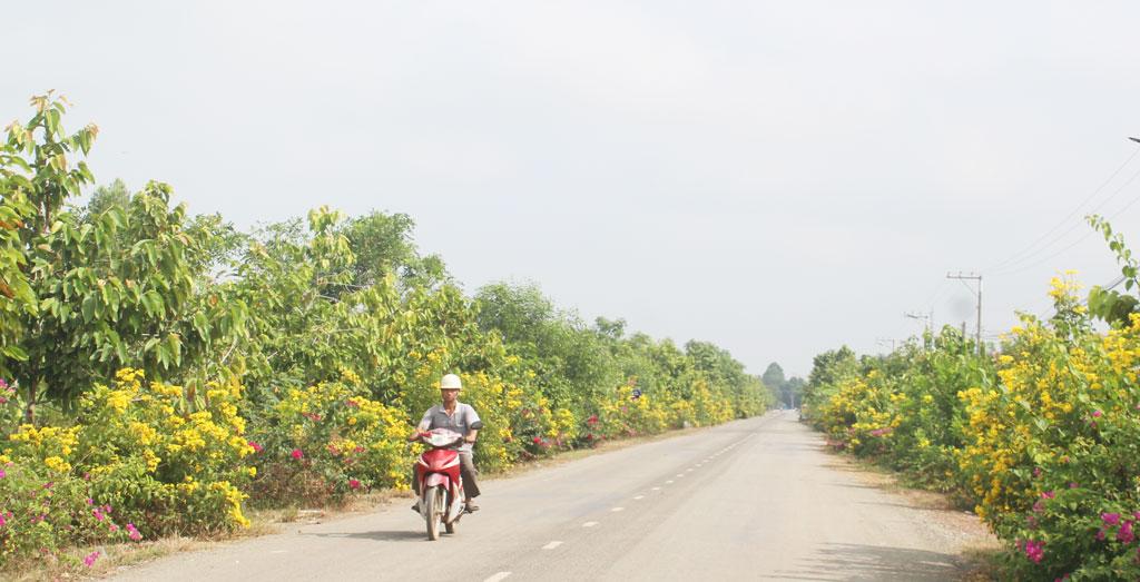 Tuyến đường hoa tại xã Thái Bình Trung, huyện Vĩnh Hưng góp phần thay đổi diện mạo quê hương