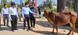 Nguyên Chủ tịch nước - Trương Tấn Sang trao bò cho hộ nghèo tại huyện Tân Hưng