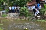 Tân Hưng: Tổng kết mô hình nuôi cá đồng trên ruộng lúa