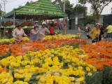 Long An: Chợ hoa Xuân khởi động vào ngày 09/01