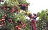Nông sản Việt: Đi theo hướng chính ngạch để xuất khẩu bền vững
