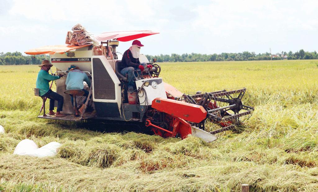 Sản lượng lúa cả năm đạt kế hoạch đề ra là 2,75 triệu tấn