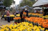 Nhộn nhịp chợ hoa xuân TP.Tân An