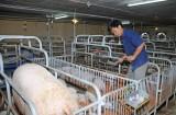 Long An khuyến khích phát triển chăn nuôi gia súc, gia cầm và thủy sản