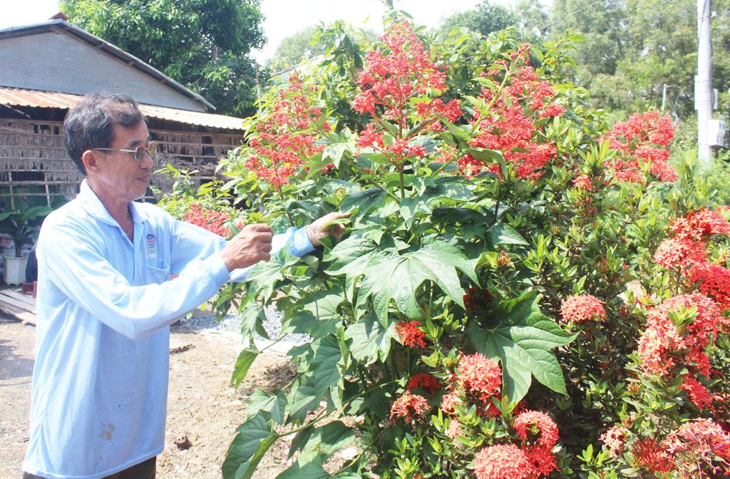 """Ông Trần Thanh Bảy tự hào nói: """"Người dân ấp Nguyễn Sơn đua nhau trồng hoa, cây xanh trong nhà và cả các tuyến đường liên xóm, liên ấp"""""""