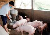 Sau tết, người chăn nuôi ngại tái đàn gia súc, gia cầm