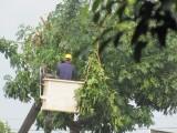 Dự thảo quy định cấm người lao động chưa đủ độ tuổi làm việc trong môi trường nặng nhọc, độc hại, nguy hiểm