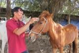 Buồn, vui tiếng vó ngựa