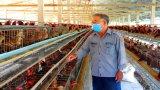 Cần Đước chủ động phòng, chống dịch cúm gia cầm