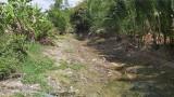 Nhiều cánh đồng, kênh mương khô cạn nước