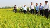 Thứ trưởng Bộ NN&PTNN - Lê Quốc Doanh: Lúa Đông Xuân 2019-2020 thoát khỏi ảnh hưởng của hạn, mặn