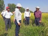 Kiến Tường: Đánh giá hiệu quả áp dụng phân hữu cơ sinh học UP5 vào sản xuất lúa