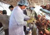 TP.Tân An: Tiêm phòng vắc xin cúm A/H5N1 đợt 1/2020