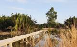 UBND huyện Cần Giuộc thông tin vụ xây cầu bị xử phạt hành chính