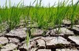 Bài 2: Hạn, mặn bao phủ Đồng bằng sông Cửu Long