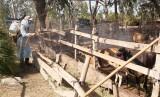 Tân Hưng: Tổng vệ sinh tiêu độc, khử trùng môi trường