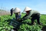Công bố 'Sách Trắng hợp tác xã Việt Nam năm 2020' vào tháng Tư