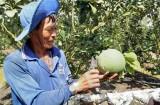 Chuyển đổi cây trồng, thích ứng với biến đổi khí hậu