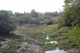 Bài 1: Hàng ngàn hécta lúa bị thiệt hại