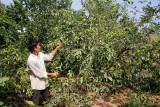 Bài 2: Cây ăn trái nguy cơ thiếu nước tưới nghiêm trọng