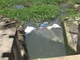 Cần xử lý nghiêm việc vứt xác động vật và rác thải bừa bãi