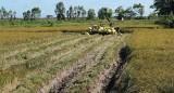 Bất chấp khó khăn do Covid-19 xuất khẩu gạo tăng cả giá và lượng