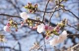 Fukushima cảm ơn hỗ trợ của Việt Nam sau thảm họa động đất, sóng thần