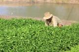 Duy trì ứng dụng công nghệ cao vào sản xuất nông nghiệp mùa hạn, mặn
