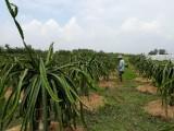 Hợp tác xã: Đòn bẩy thúc đẩy kinh tế khu vực nông thôn phát triển