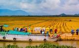 ĐBSCL chuyển đổi tư duy sản xuất nông nghiệp sang kinh tế nông nghiệp