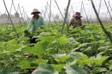 Hợp tác xã nông nghiệp Mỹ Thạnh: Tạo đầu ra ổn định cho các thành viên