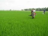 Nông dân tích cực chăm sóc lúa Hè Thu 2020