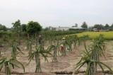 Nhựt Ninh tăng tốc về đích nông thôn mới