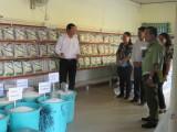Long An: 3 thương nhân xuất khẩu gạo ký thỏa thuận với hệ thống phân phối bán lẻ cung cấp gạo dự trữ