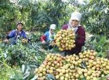 Truyền thông Đức: Việt Nam lạc quan về triển vọng kinh tế của đất nước