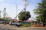 TP. Tân An: Chủ động cắt tỉa cây xanh trước mùa mưa, bão