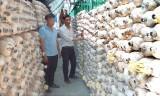Làm giàu từ trồng nấm