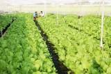 Nông dân Phước Vân: Tích cực sản xuất giỏi, giảm nghèo bền vững