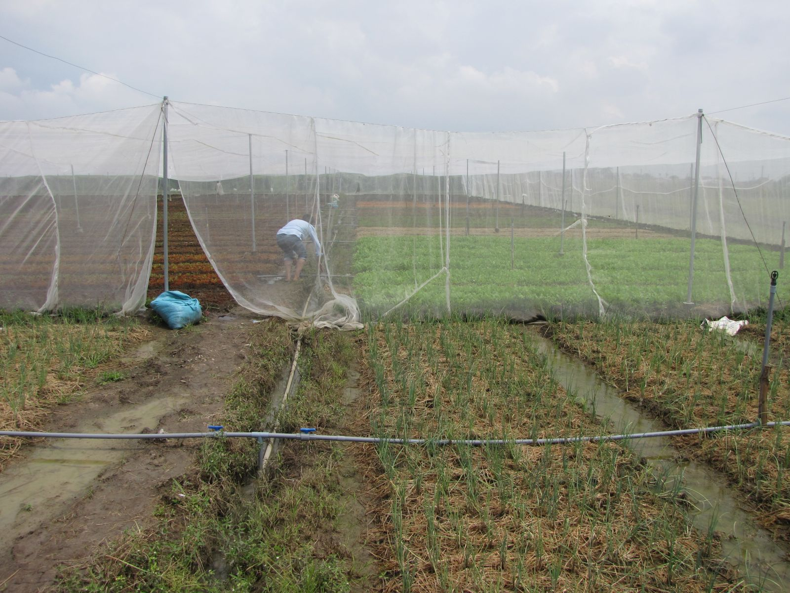 High-tech agricultural production in Tan Tru brings high economic efficiency and increases income for the people