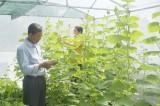 Trồng rau thủy canh - Giải pháp cho nông nghiệp đô thị