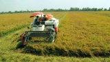 Đức Huệ: Xây dựng vùng sản xuất chuyên canh gần 1.400ha lúa chất lượng cao và hơn 2.600ha chanh