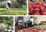 Trung Quốc tăng cường các biện pháp quản lý nguồn gốc thực phẩm