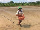 Nỗ lực khắc phục sản xuất nông nghiệp sau hạn mặn lịch sử ở Tiền Giang