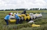 Thị trường nông sản tuần qua: Giá lúa gạo, càphê đều tăng