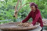 Mẹ Việt Nam Anh hùng: Những người 'chắt thương đau' thành 'nhựa sống'