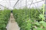 Phát huy hiệu quả hoạt động, tạo liên kết chuỗi giá trị từ các hợp tác xã nông nghiệp