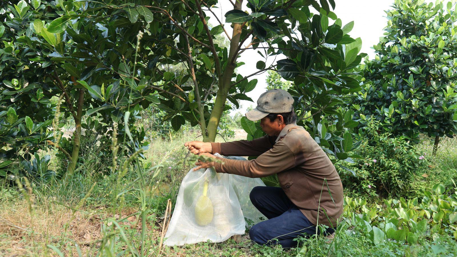 Nông dân chuyển đổi cây trồng, bước đầu mang lại hiệu quả kinh tế cao