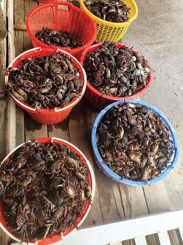 Ba khía muối ngon nhất, nổi tiếng nhất từ xứ Rạch Gốc - Ảnh: Châu Sang