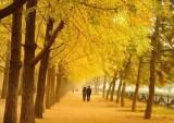 Mùa thu dịu dàng…