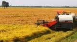 Chủ động giúp nông dân sản xuất thắng lợi vụ lúa Hè Thu